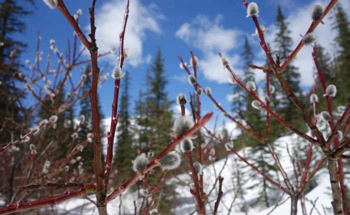 Spring Snowshoeing