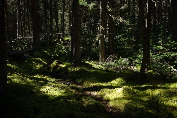 As we near the pass, the forest becomes more and more lush