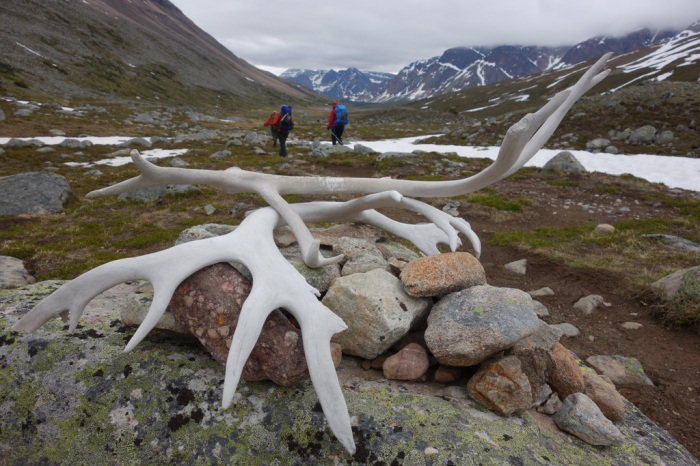 Caribou antlers at Jonas Pass