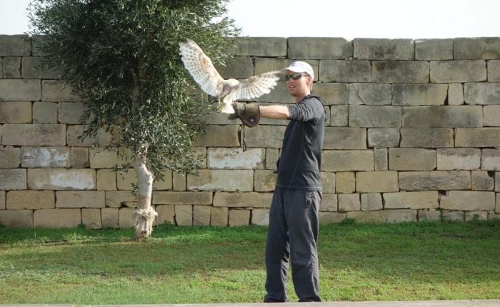 Maltese Falconry