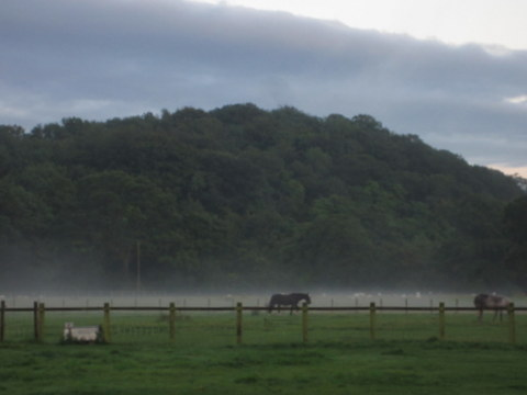 Misty pastures after the storm.