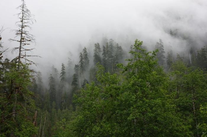 Mystery Mist
