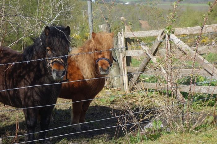 Scottish farmland