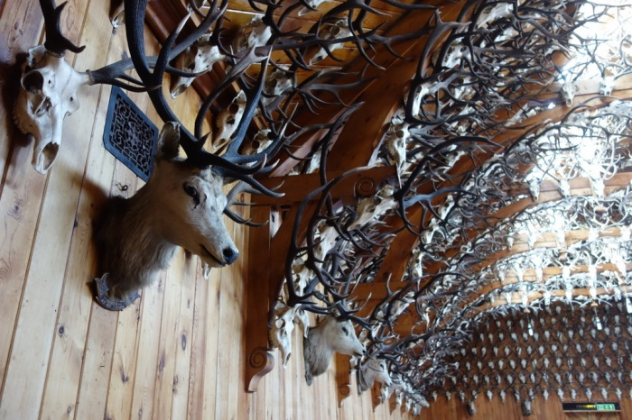 There are more than 2,500 stag heads dating from the Victorian era!