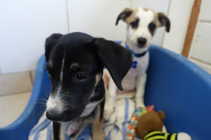 Puppies waiting to be adopted