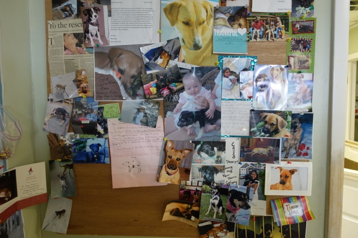 Thank-you notes from happy adopted dogs and their new families