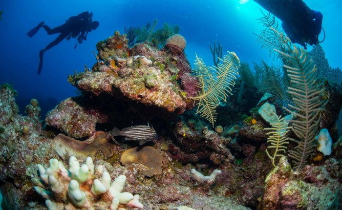Scuba Diving in Bahamas aboard the Carib Dancer