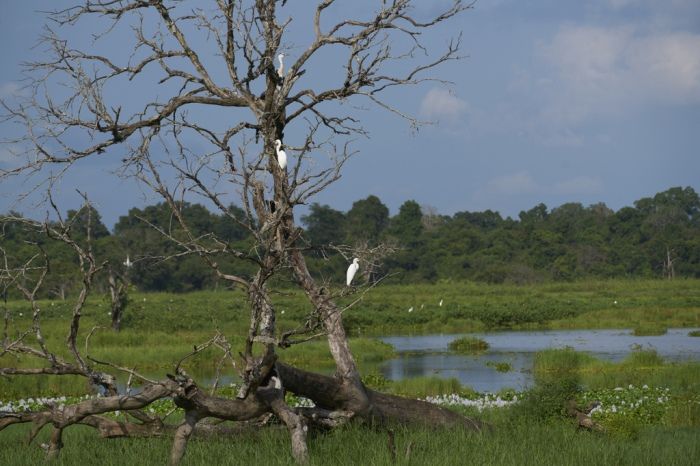 The park has more than 100 bird species