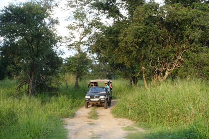 A nice calm Jeep Safari