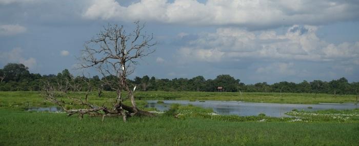 Stranded in the Sri LankanJungle