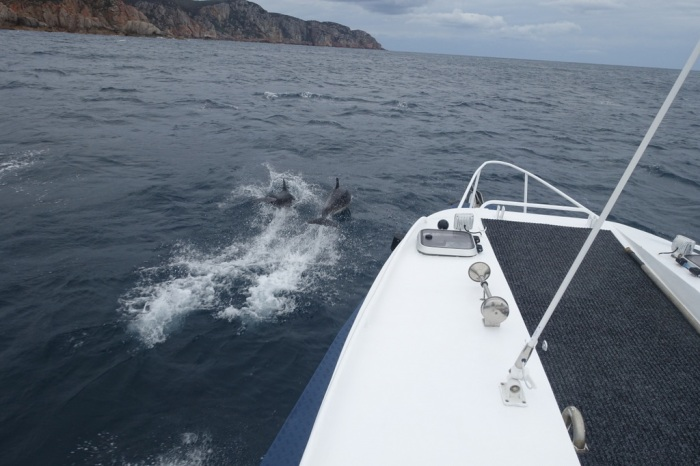 More Dolphins!