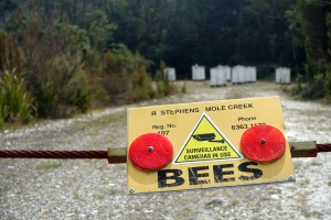 Bees everywhere!!
