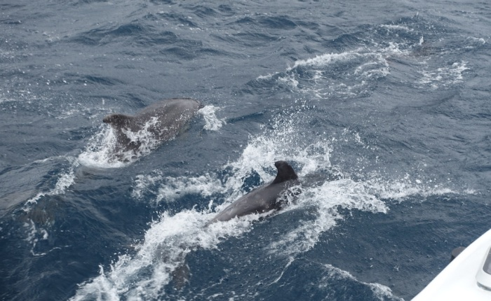 Dolphins sighted at Maria Island!