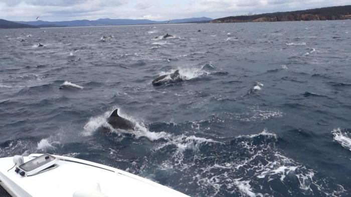 Dolphins everywhere!