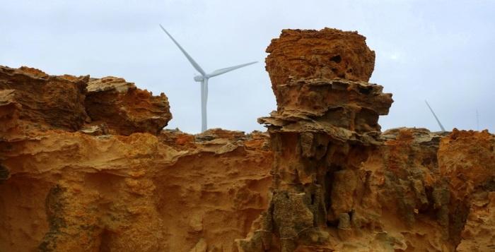 Cape Bridgewater - Tubes of limestone masquerade as petrified trees