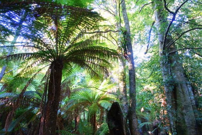 Myrtle Forest Walk