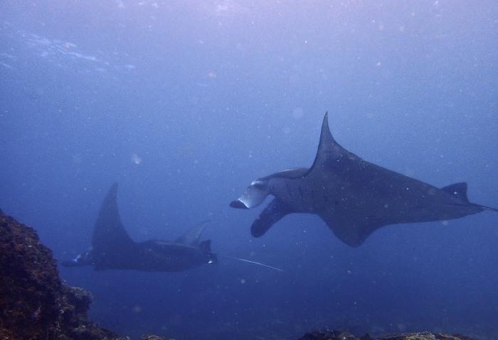 100 Scuba Dives