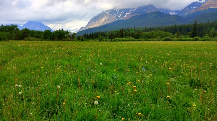 Wildflowers and open meadows along the Belly River