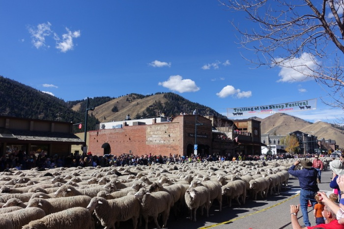 Ketchum Sheep Festival