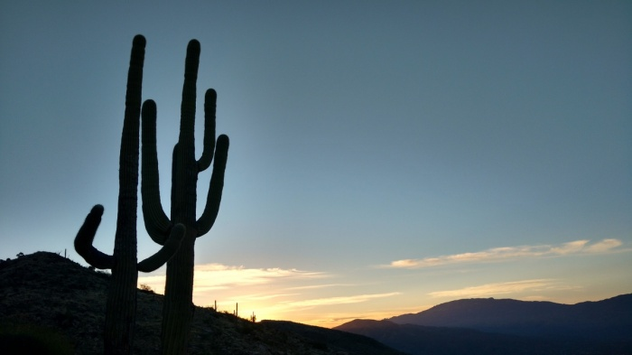 January - I discover my new favourite place to hike & cycle - the Sonoran Desert of Southern Arizona