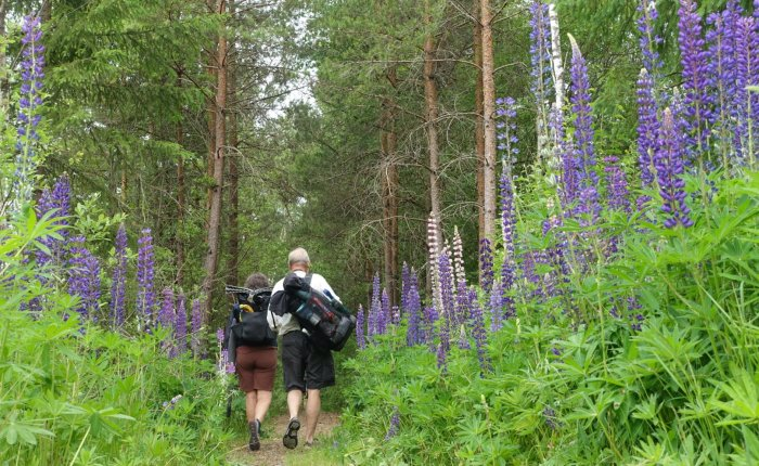 Walking Coast to Coast across Sweden