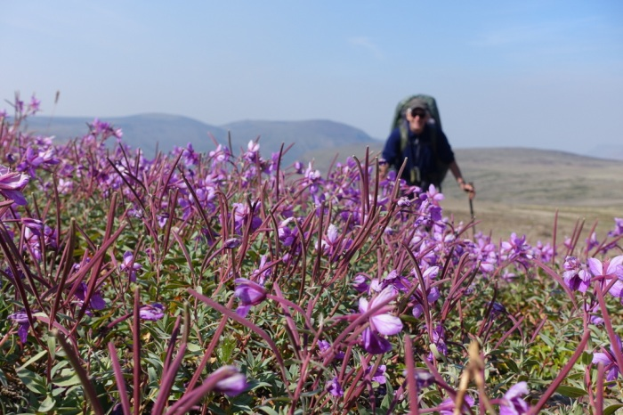 Wild flowers on Kitsu Plateau