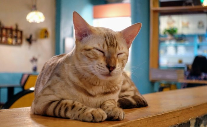 Cat Cafes of Beijing